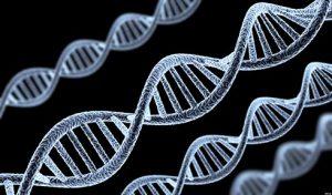 මිනිස් කළලයක DNA අනු නොයෙකුත් සංස්කරණයන්ට භාජනය වෙමින් පවතී